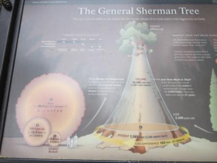 Sherman tree explanation.